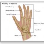 hand-wrist